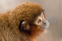 Frequently Asked Questions about Nonhuman Primates in Research